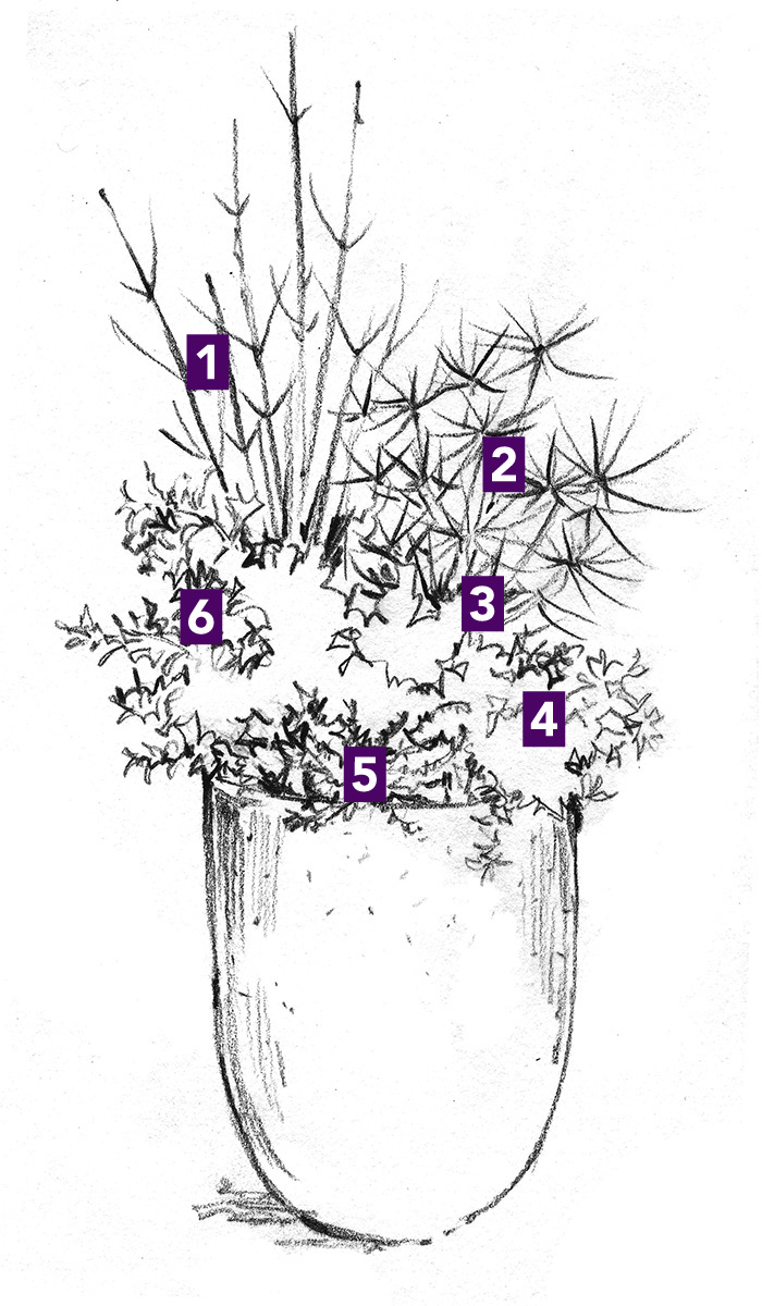 Tall winter container plant ids