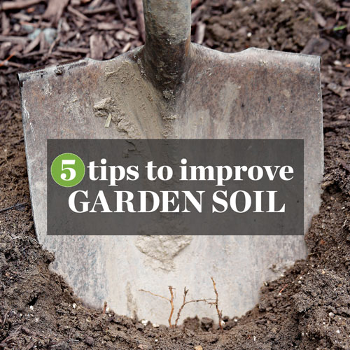 5 Tips To Improve Your Garden Soil