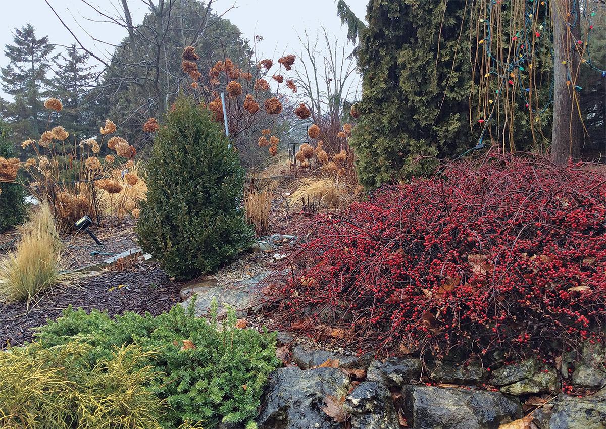 evergreens shrubs and ornamental grasses