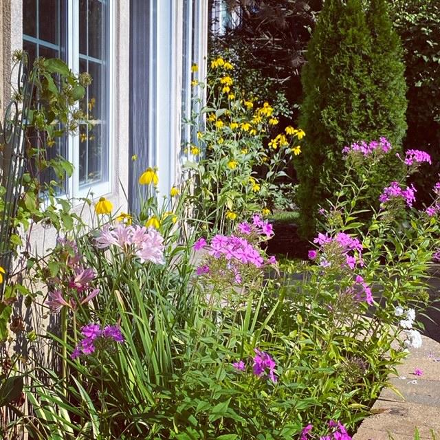summer-blooming perennials