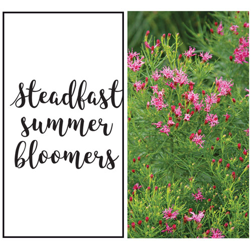 3 Steadfast Summer Bloomers