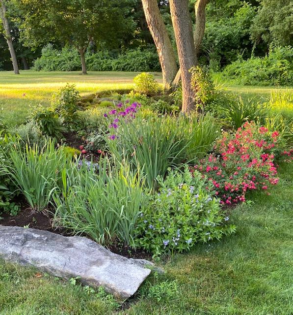 perennial garden bed