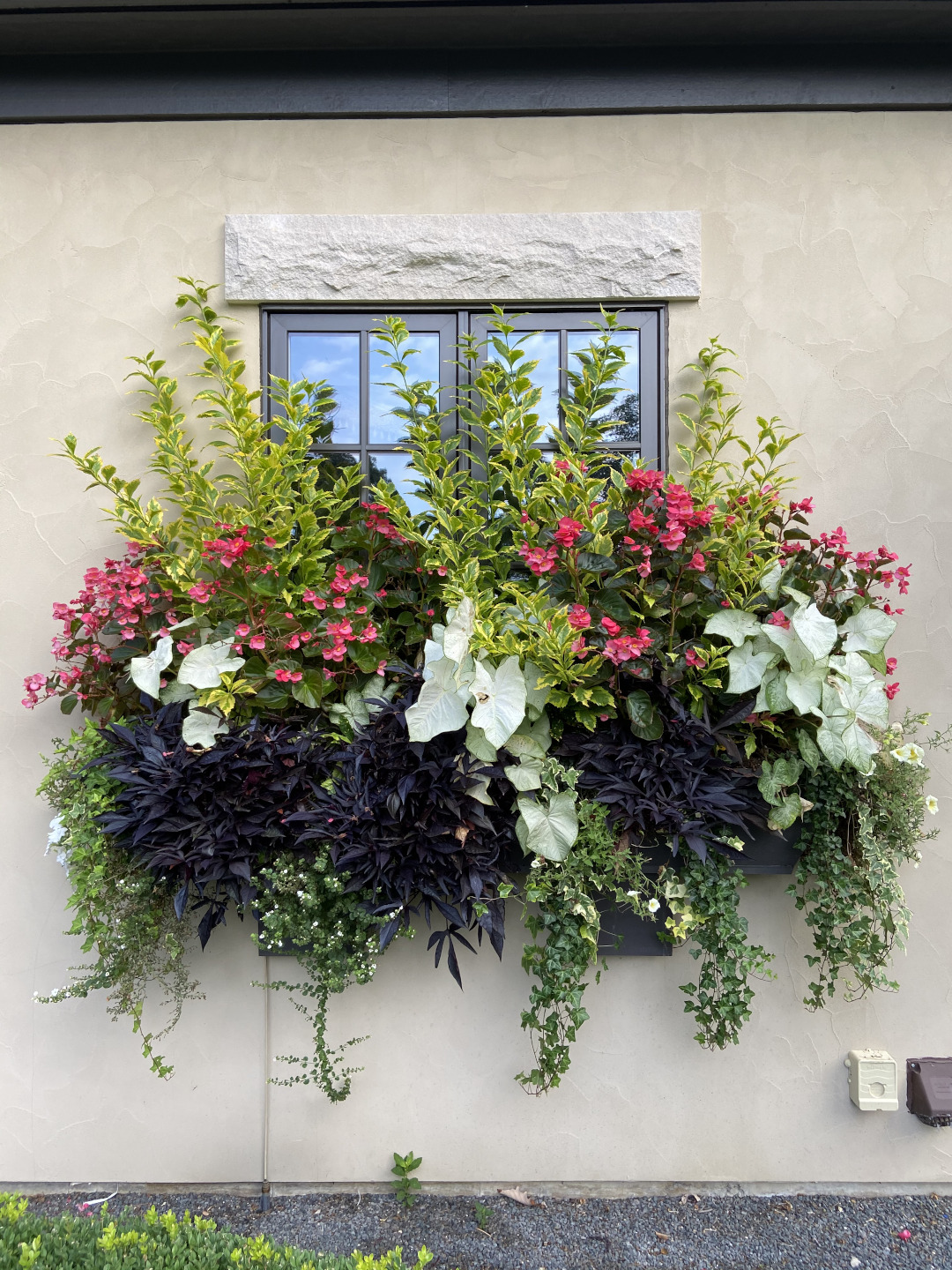 summer window box