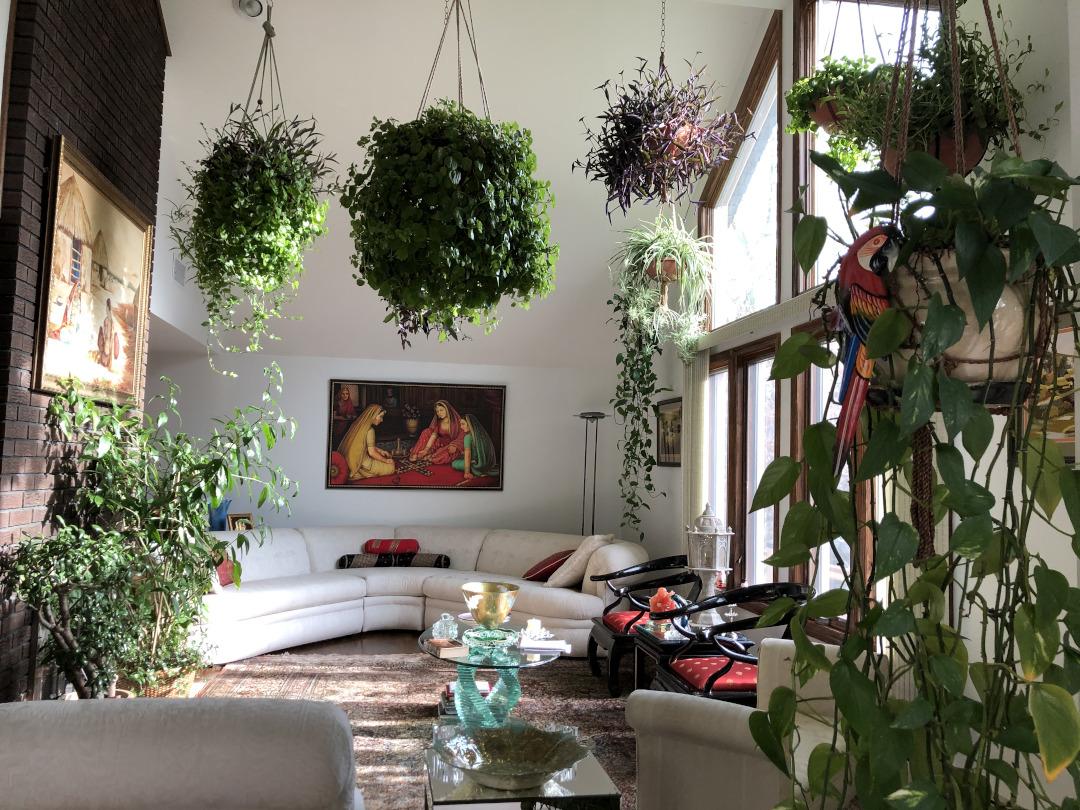 hanging houseplants