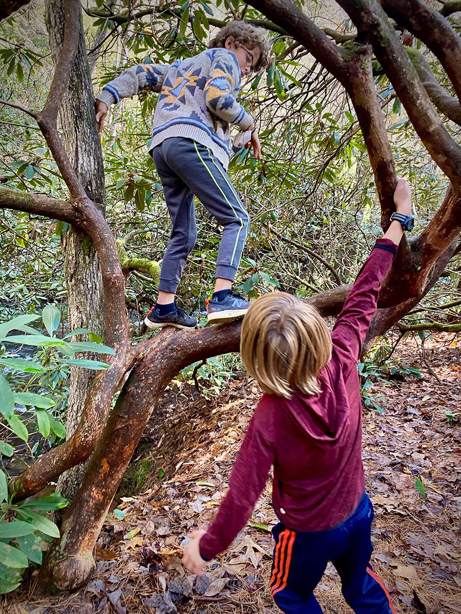 kids climbing a tree