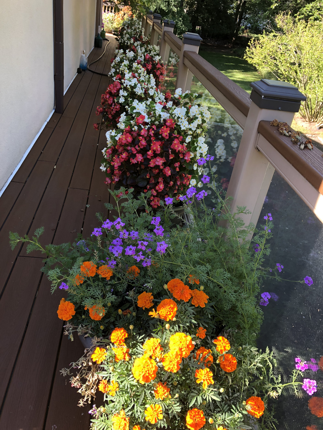 Pots of colorful flowers on a deck