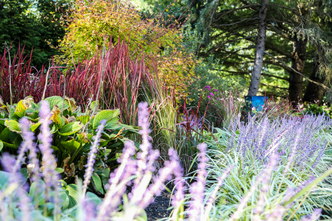 Perennials in a garden