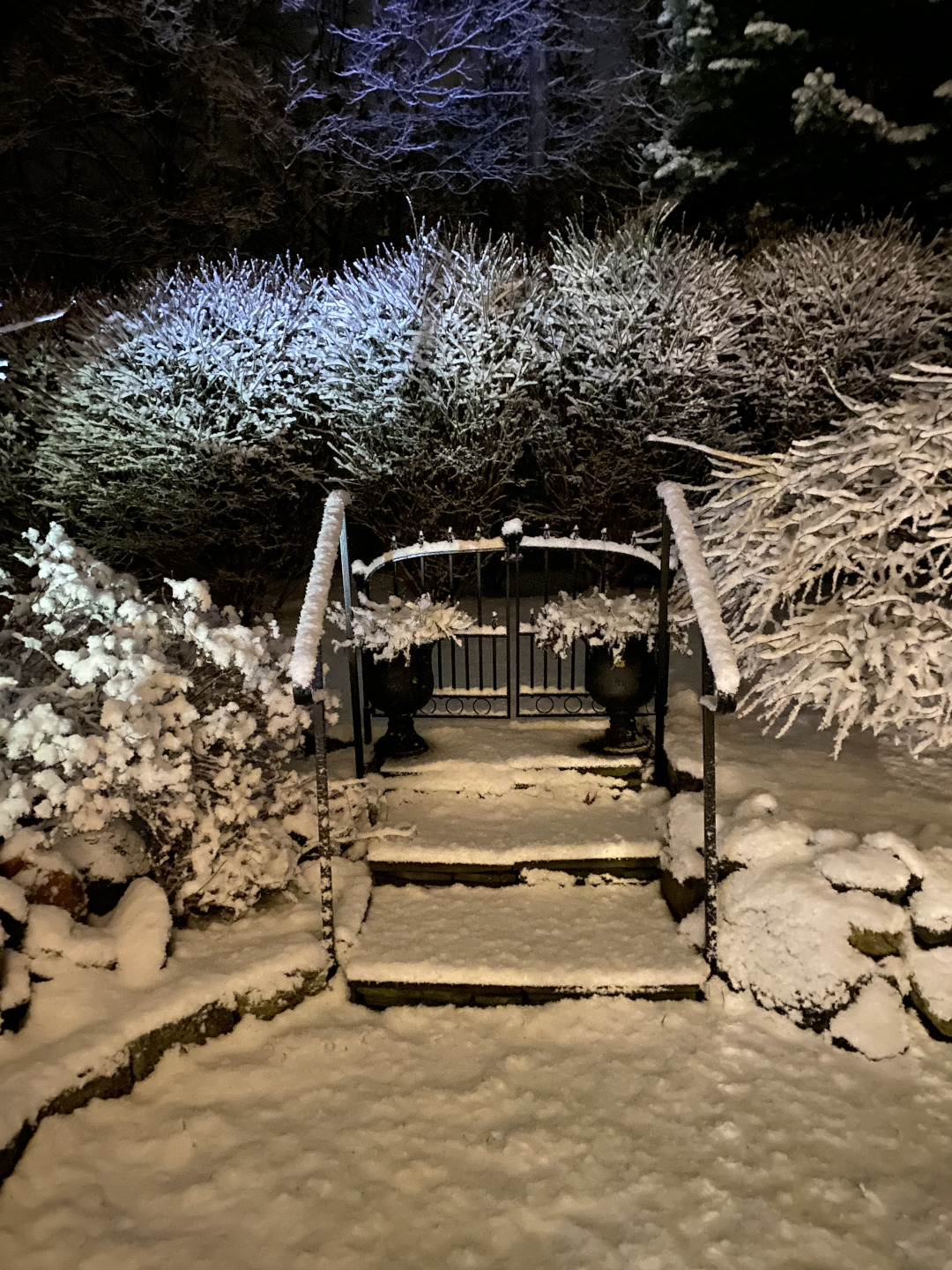 Garden with snow-covered bushes and steps