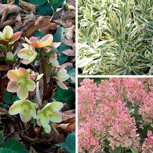 foundation-friendly plants