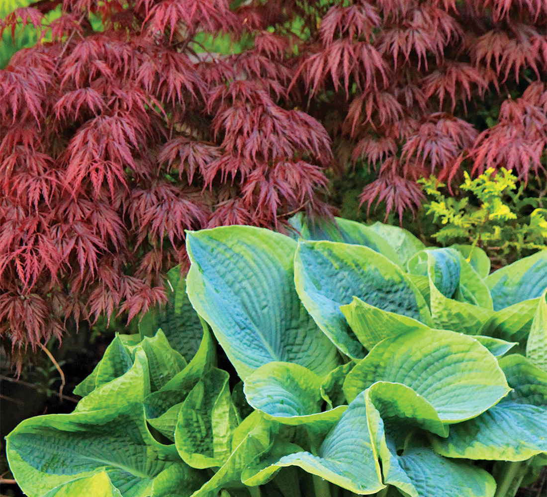 red and chartreuse plant combination