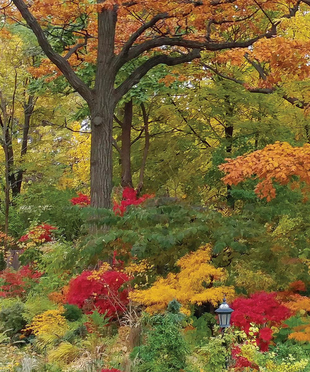 fall shade garden