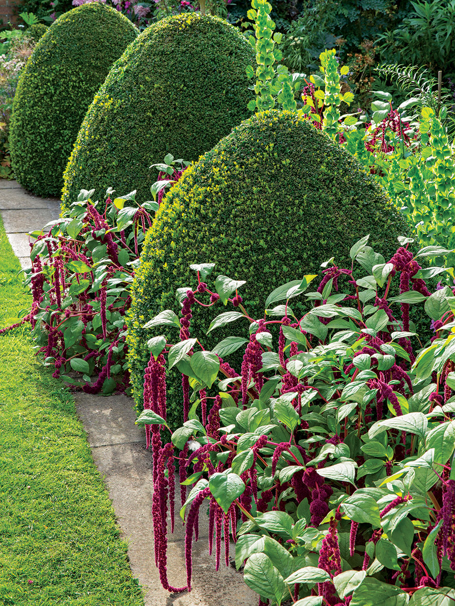 Jazz up greenery with annuals