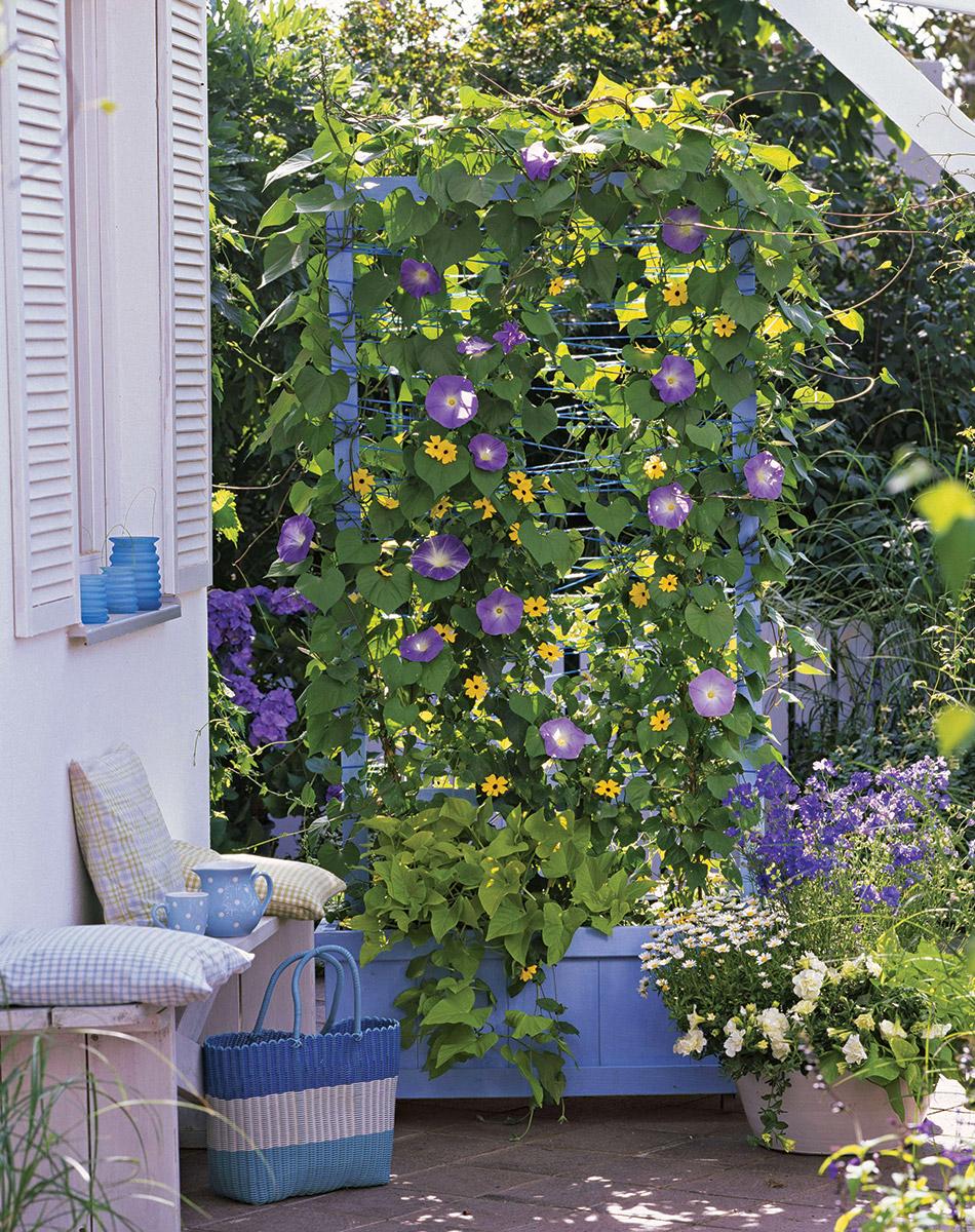 Create a seasonal screen with annuals