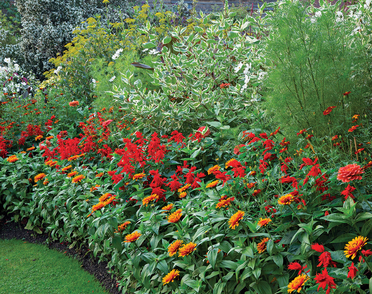 Add consistent color to a scene with annuals