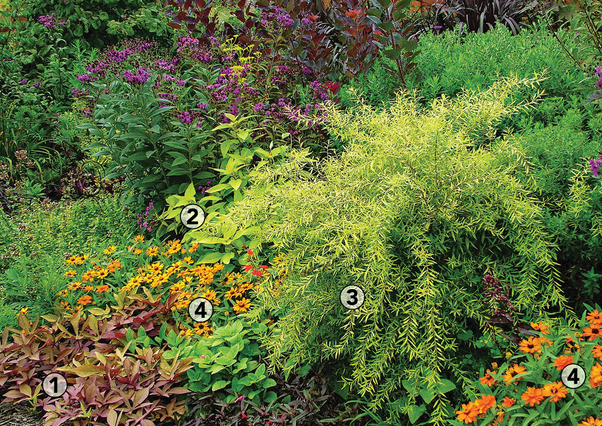 annuals bring unity to garden bed