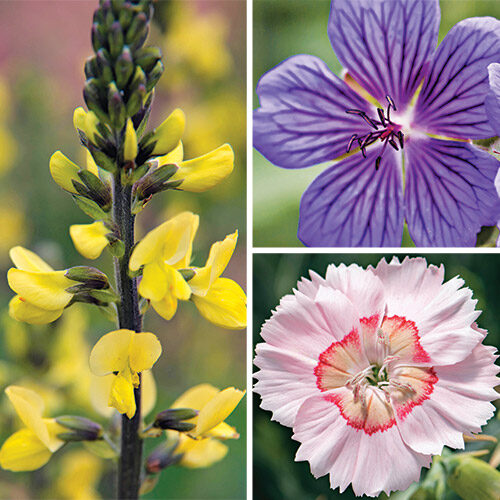 Outstanding Spring Plants