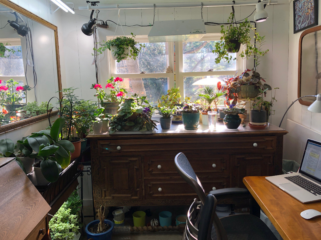 House plants in an office