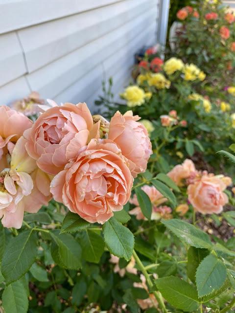 Finally rose