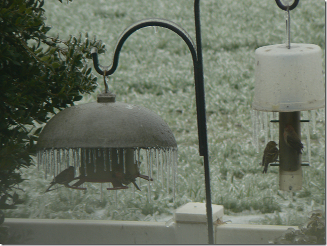 bird feeders in winter