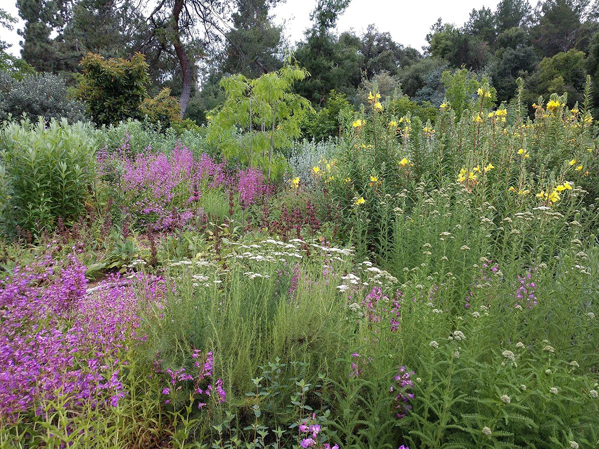 all-native garden