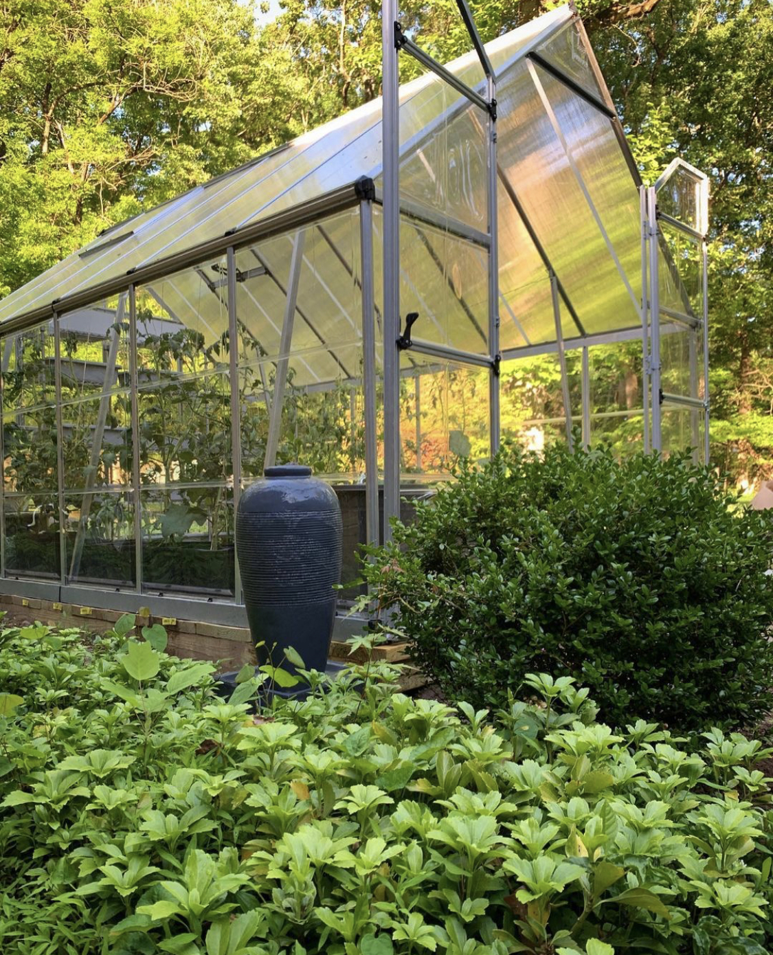 Greenhouse surrounded and filled by growing plants