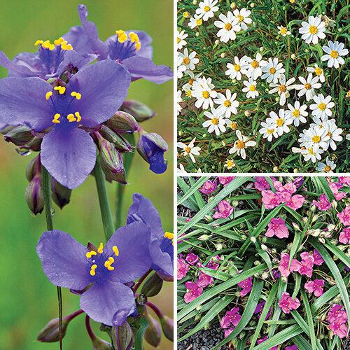 great native plants