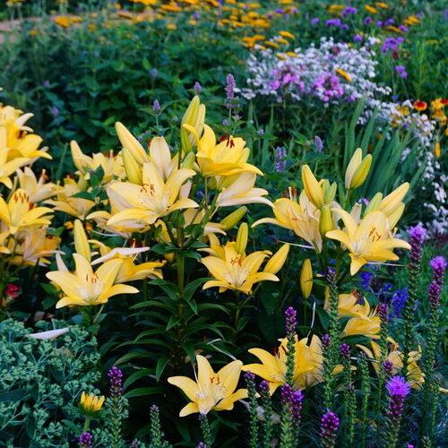 Hannah's Flower Garden