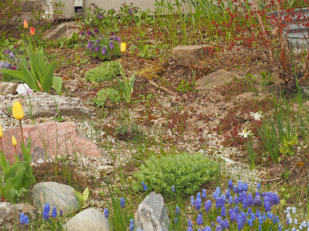 Diverse plants growing over a rocky garden