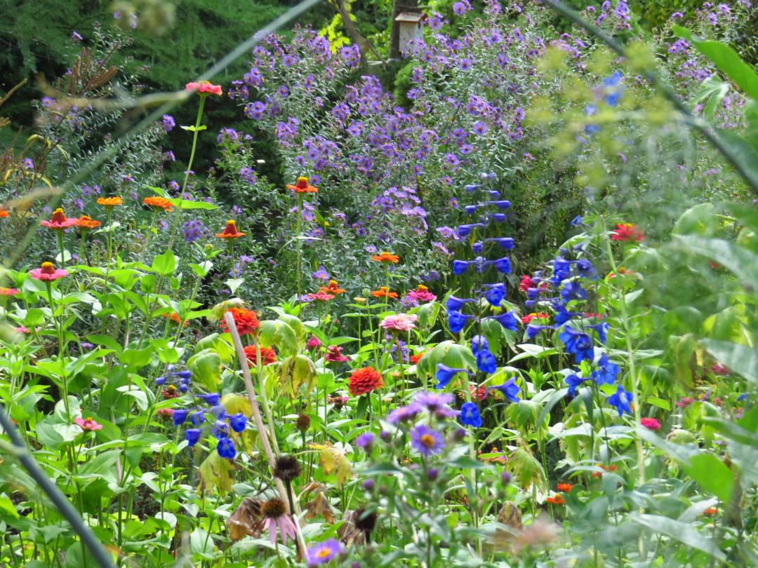 late summer garden full of flowers