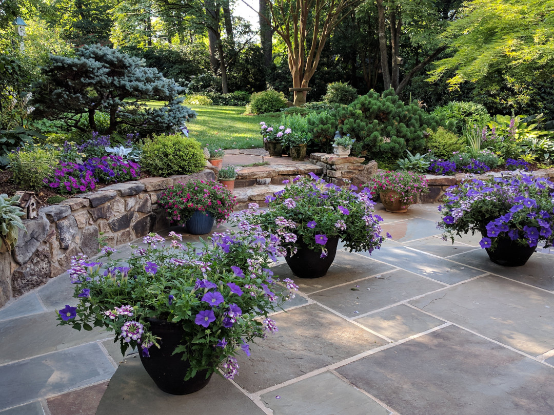 potted plants on a patio