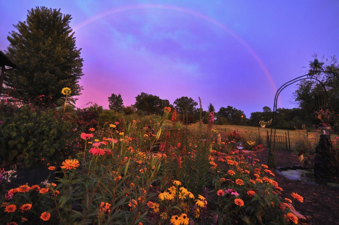rainbow over flowers