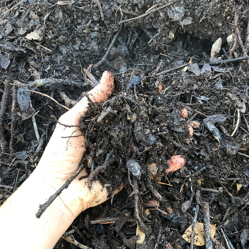 half rotted compost