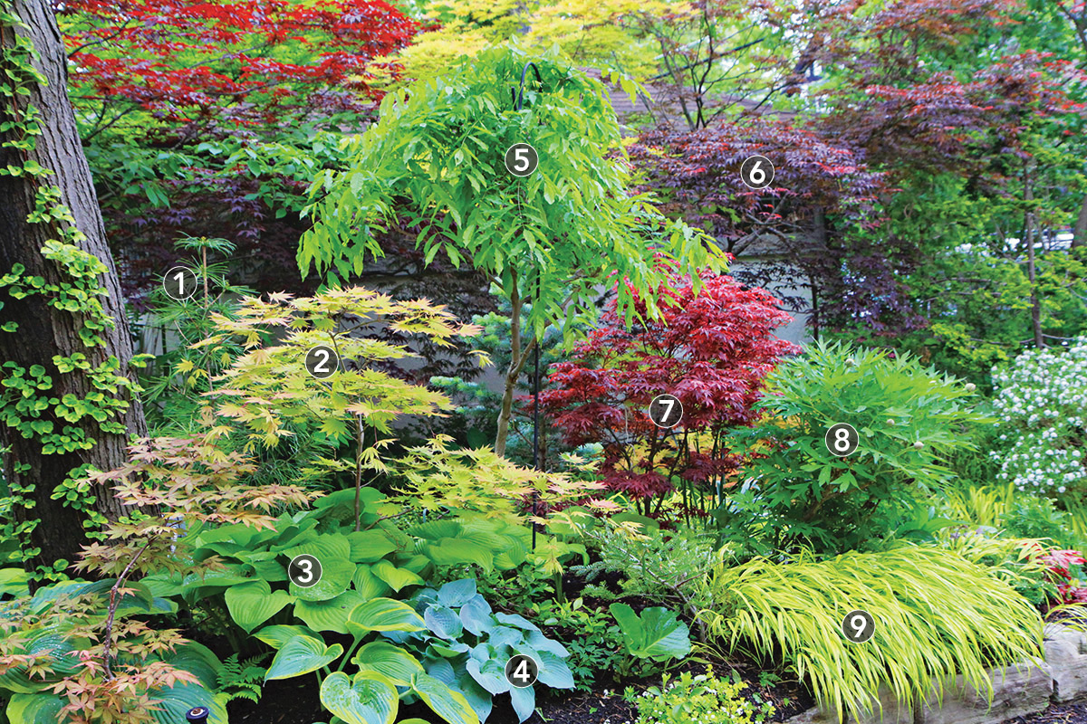 colorful foliage in a shade garden