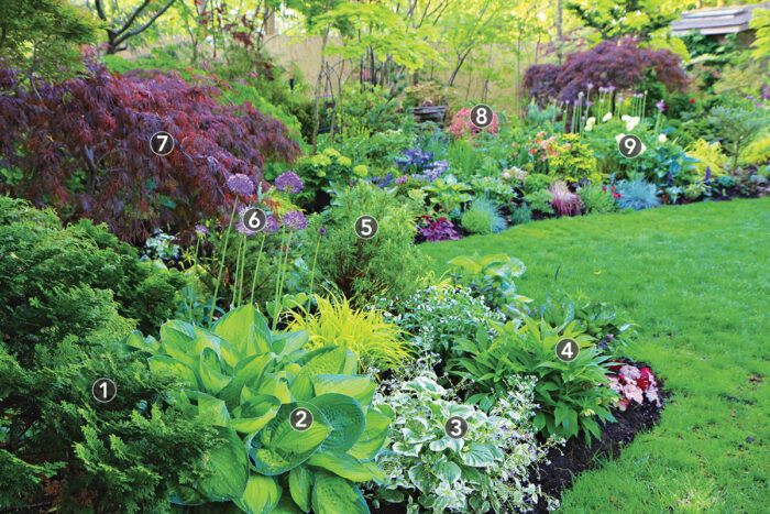 How to Design a Colorful Shade Garden – Plant IDs