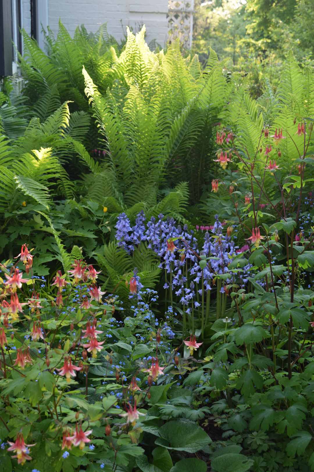 Tall ferns with blue and red flowers in front of them