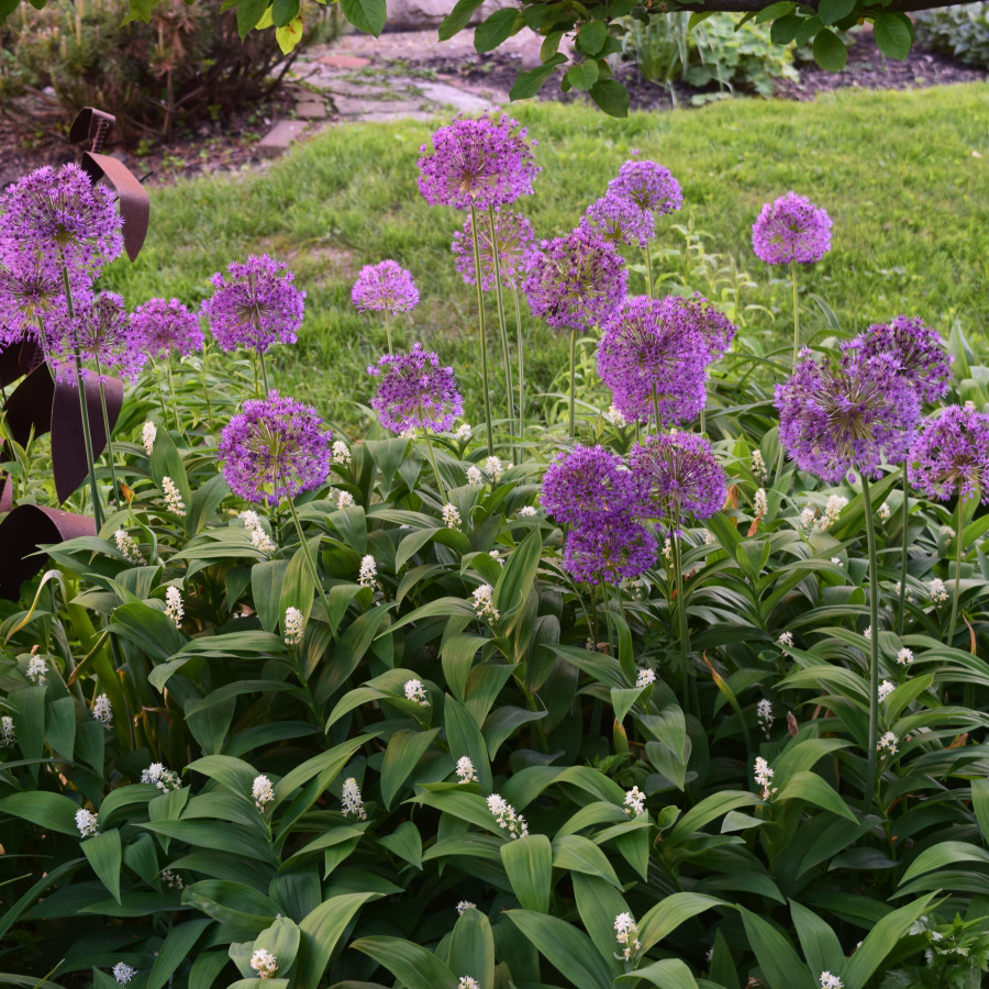 Tall purple flowers with tiny white blooms growing below them