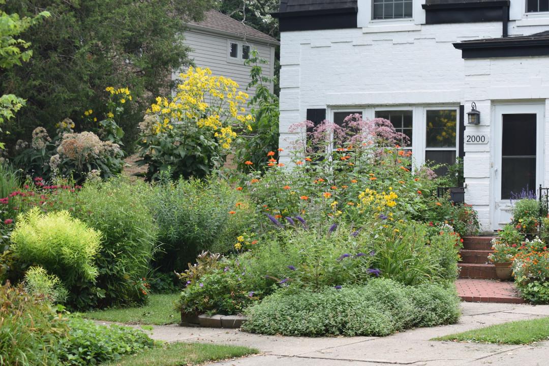 front yard garden in summertime