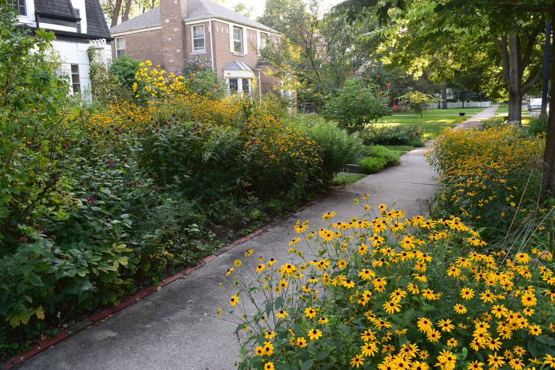 late summer garden full of yellow daisies