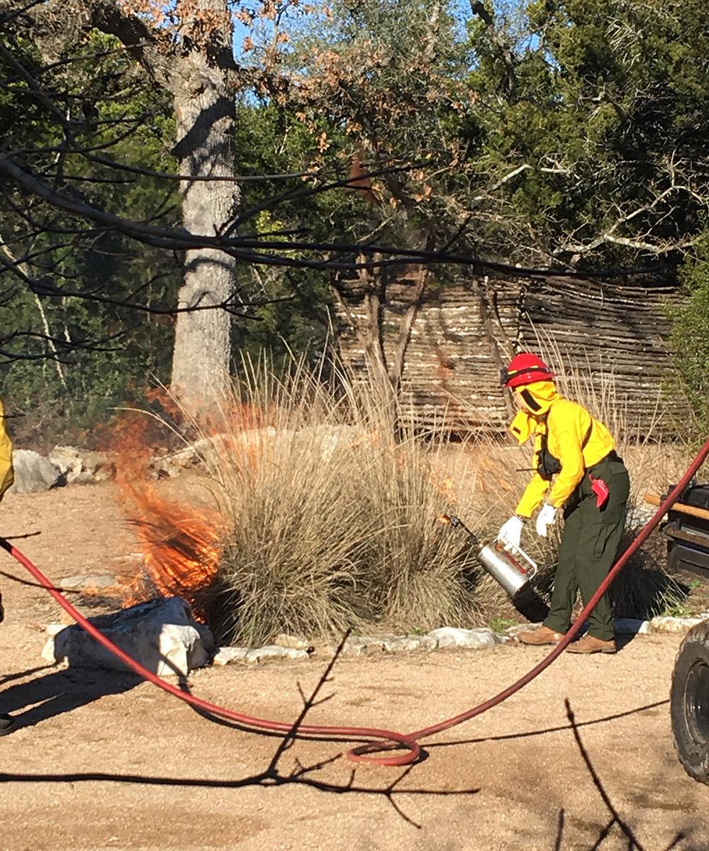 burning to prune big muhlies