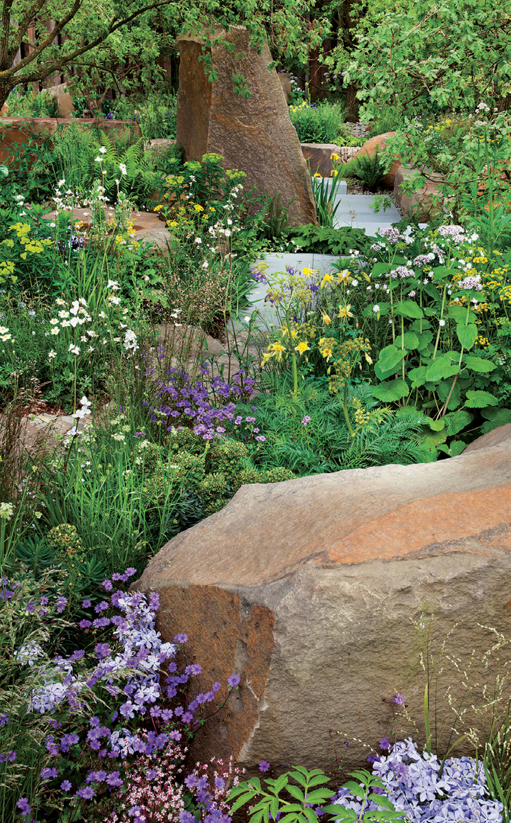 dry shade garden with purple flowers
