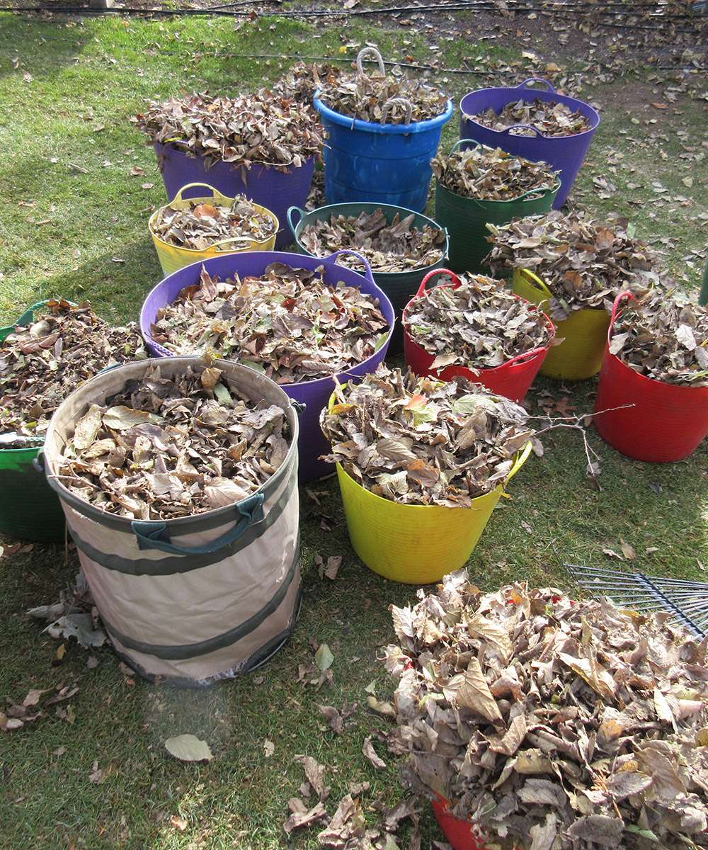 dried leaves collected in buckets