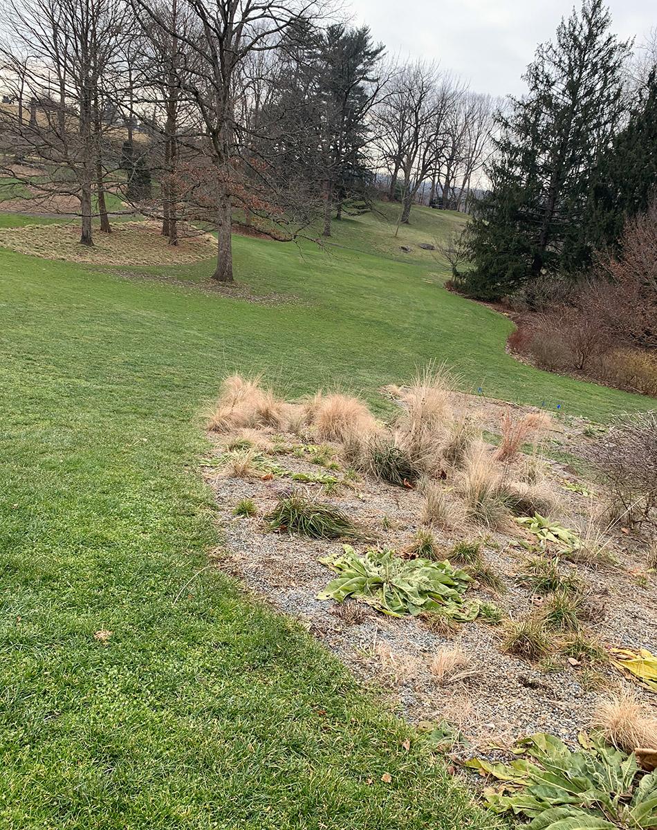 long view or axes of a garden