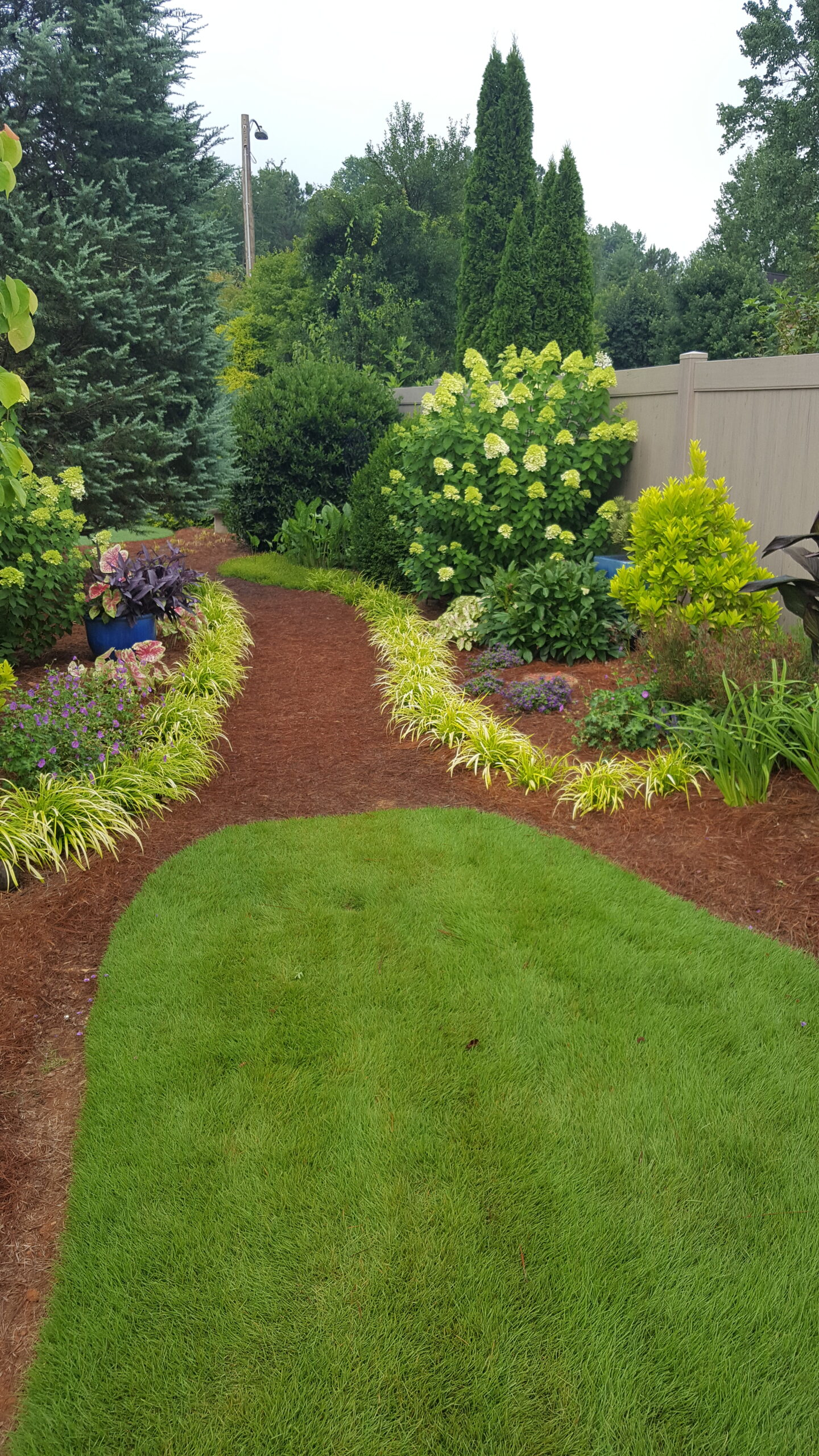 A garden path lined with yellow grasses
