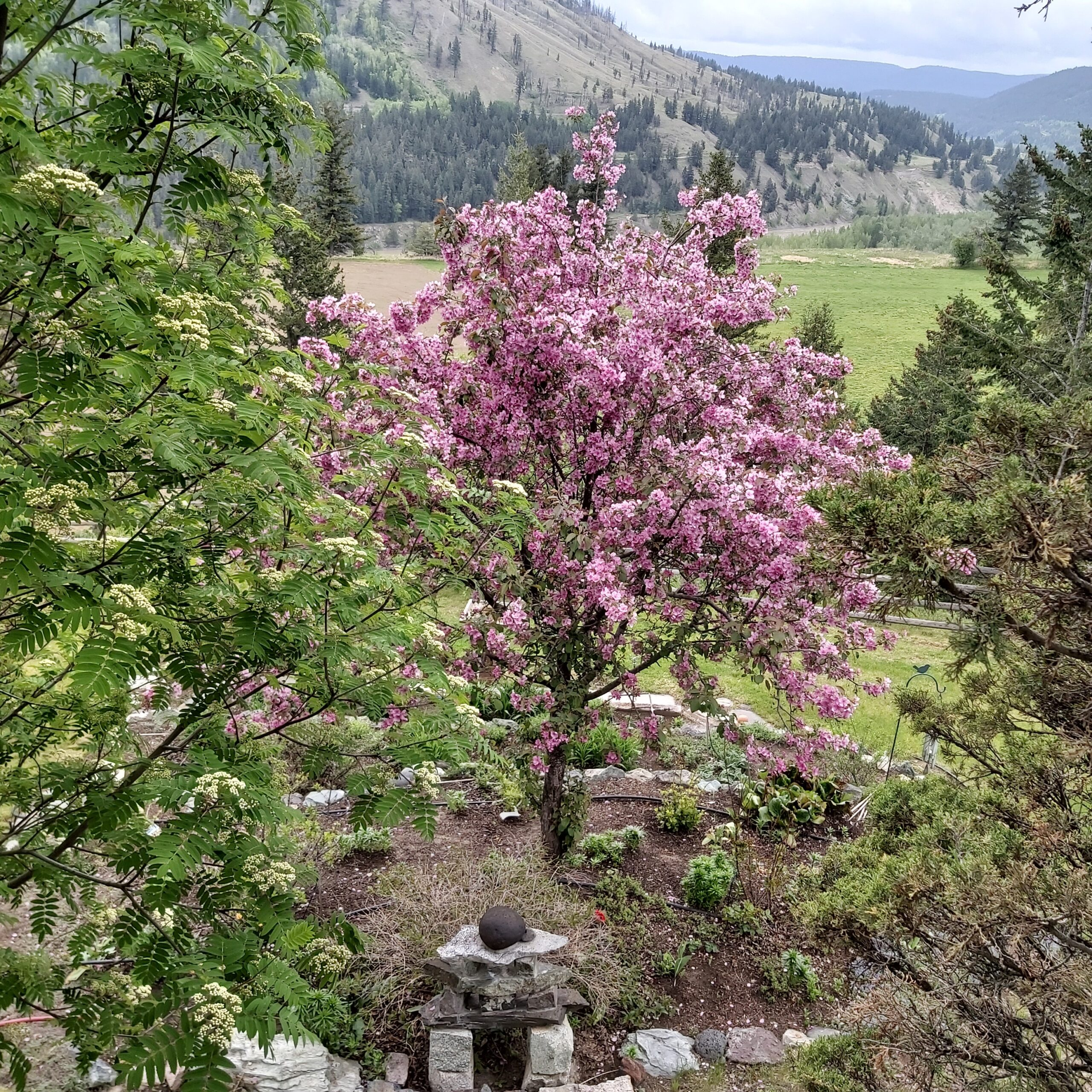 spring flowering trees in front of mountains