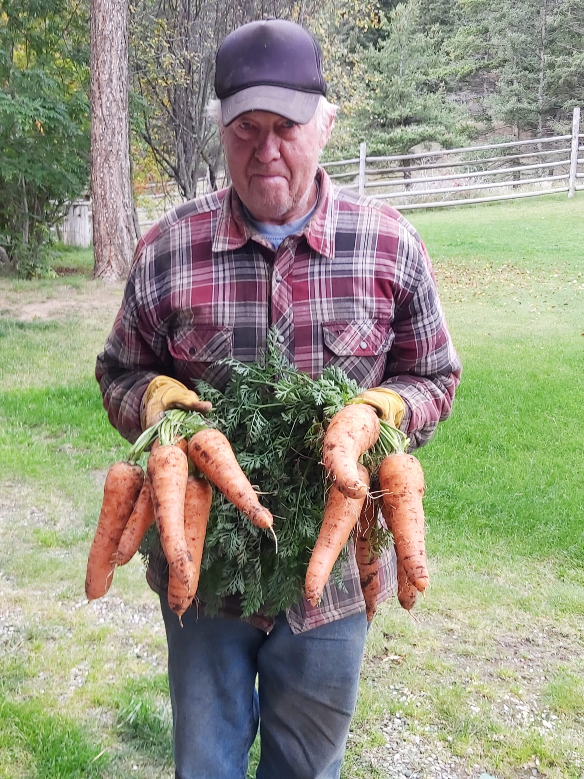 A man holding two handfuls of huge carrots