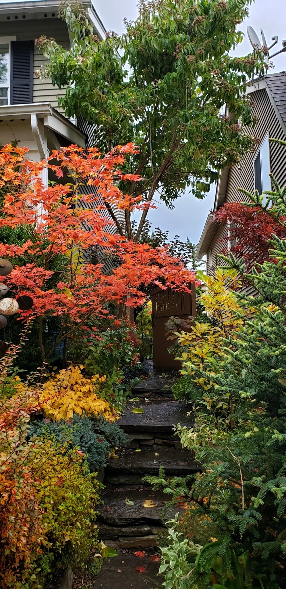 shrubs and small trees in a small garden space