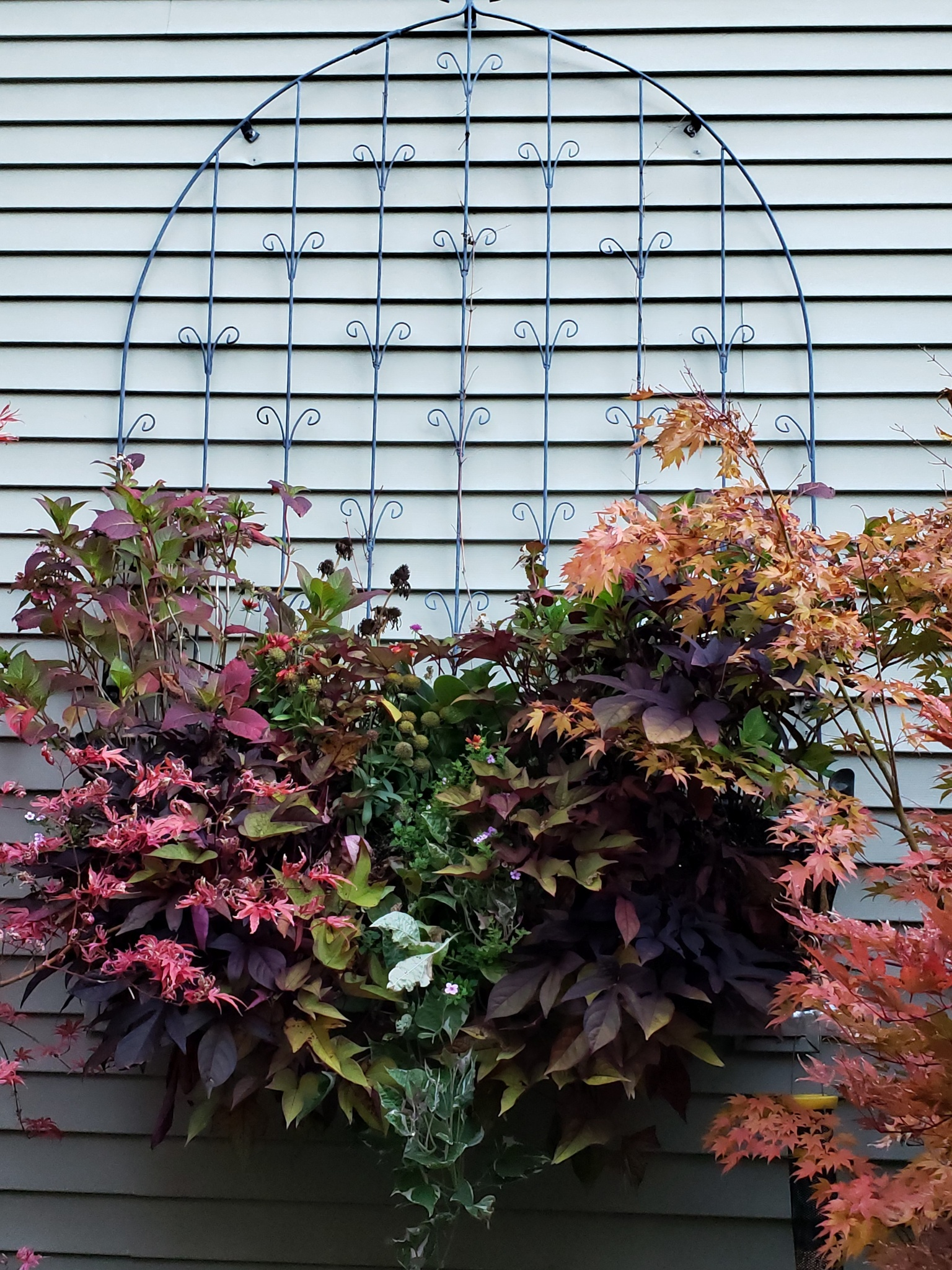 larger planter filled with dark foliage plants