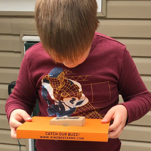 Child viewing bee nests in box
