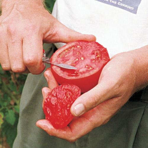 big beef beefsteak tomato