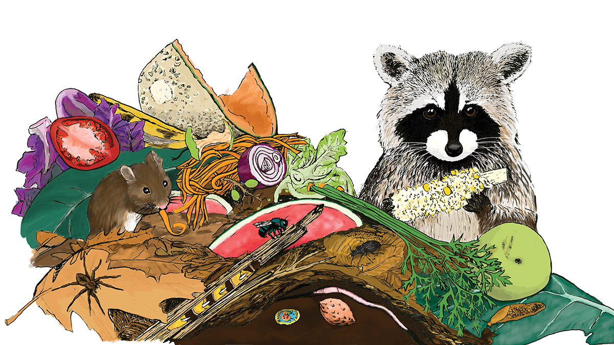 illustration of animals and insects in a compost pile